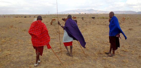 Maasai livestock traditional practice