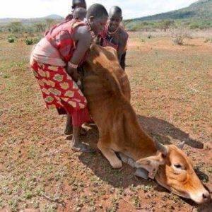 drought in Maasai lands